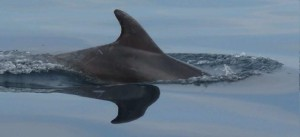 delphin-ruecken-2010