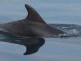 delphin-ruecken