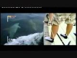 Delfinschutzprojekt Adria 2010 Seesport